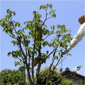 愛知県の実家の庭木で、お世話になっています。東京都世田谷区O様