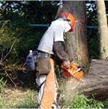 樹木伐採 1本